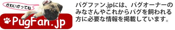 パグ犬情報ポータル|パグファン.jp